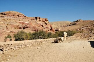 Chapter 20 Petra & Dead Sea Jordan